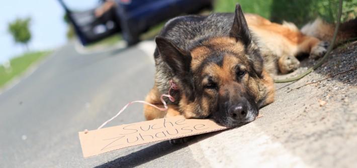 ZERGportal: Urteile und Gesetze zur Tiervermittlung