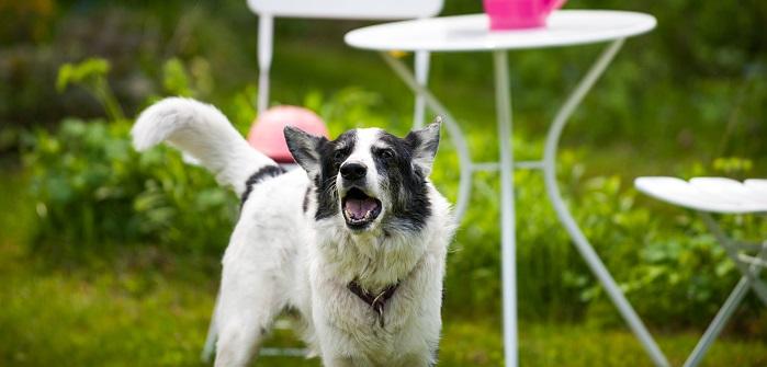 Hunde Bellt in der Nacht: Das kann führt in einigen Faellen vor Gericht