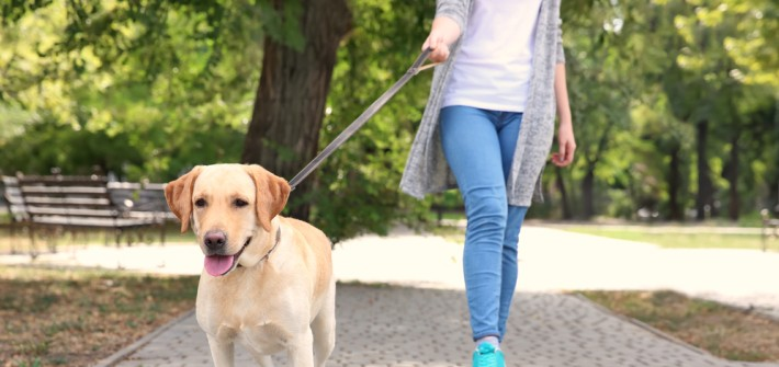 Anlein- und Sorgfaltspflicht des Hundehalters: Wer haftet wann?