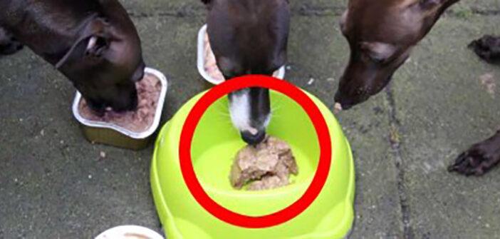 Plastik im Hundefutter: Gerücht oder Richtspruch?