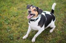 Hundegebell: Ruhestörung? Lärmbelästigung? Was ist erlaubt?
