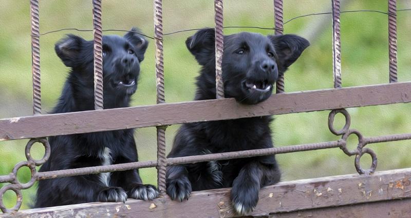 Selbst tierliebe Menschen werden ärgerlich, wenn Hunde dauernd bellen oder das Hundegebell die Nachtruhe stört. (#02)
