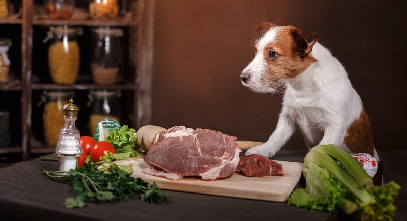 Hundefutter kann auf mehrere Arten deklariert werden. Natürlich gibt es gesetzliche Rahmenbedingungen, an die sich die Hersteller halten müssen.