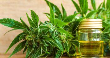 Cannabis: Was ist erlaubt? Was ist verboten?