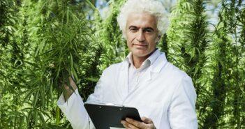 Cannabis-Anbau: Erlaubt oder illegal?