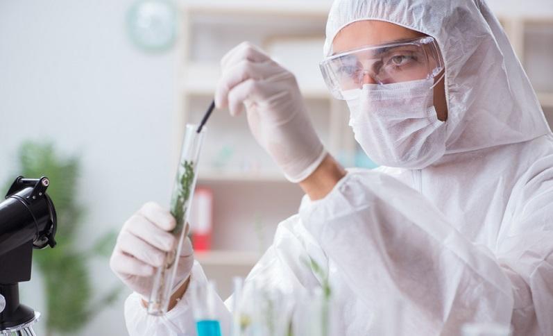 Insgesamt wird die Zahl dieser Genehmigungen aber in den kommenden Jahren vermutlich ansteigen, da Cannabis durch die medizinische Zulassung nun auch in der Forschung wesentlich mehr Aufmerksamkeit geschenkt wird.