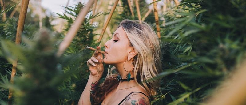 Eine Lizenz für den Anbau von Cannabis bekommen also nur Unternehmen, die sich erfolgreich beim Vergabeverfahren durchgesetzt haben.