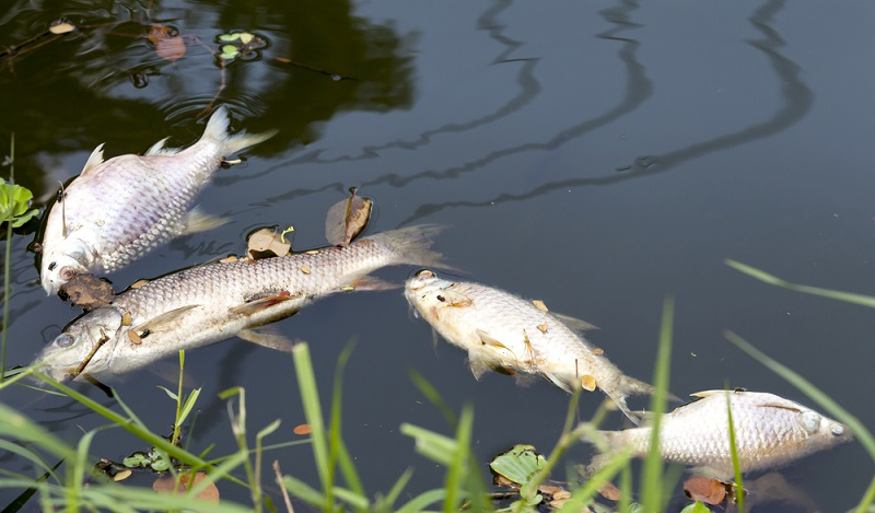 Immer wieder gibt es Urteile zur Eindämmung der Wasserverschmutzung, die durchaus für Aufsehen sorgen und nicht überall für gut geheißen werden. ( Foto: Shutterstock- OPgrapher)