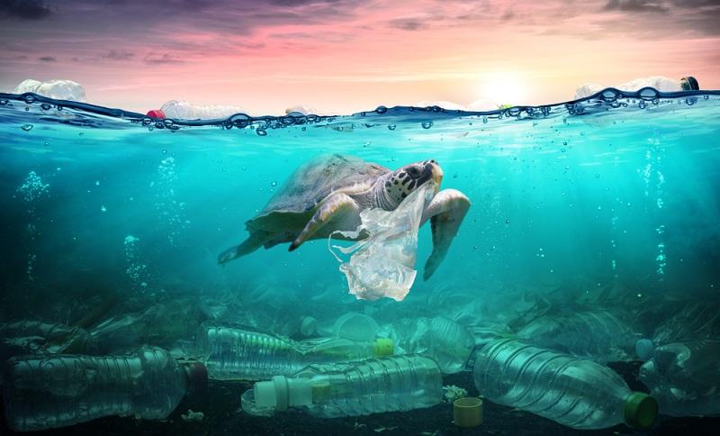 Es gibt einige spezifische Folgen der Wasserverschmutzung, die sich weltweit zeigen. ( Foto: Shutterstock-_Romolo Tavani )